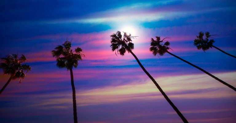 about conscious living - palm trees streaked sunset