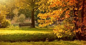 about conscious living - park in autumn